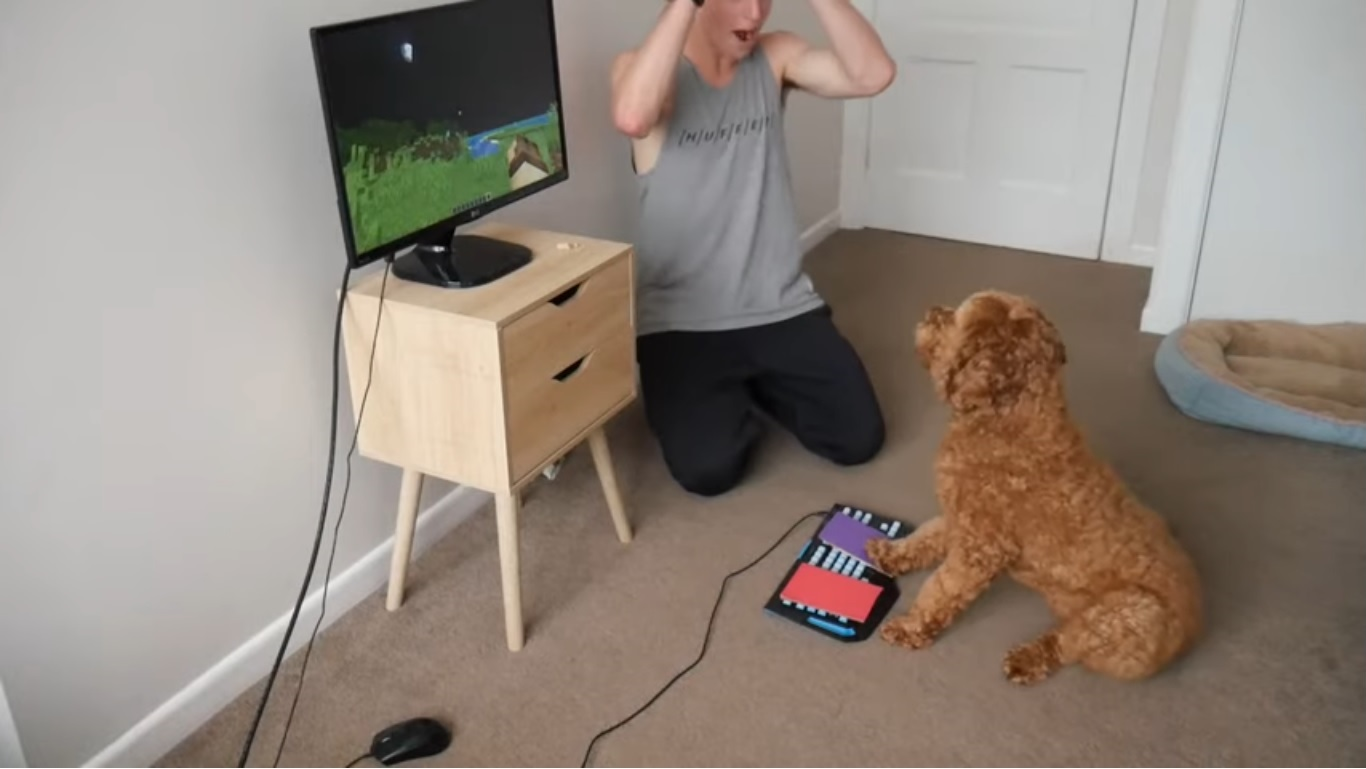 cane gioca a minecraft
