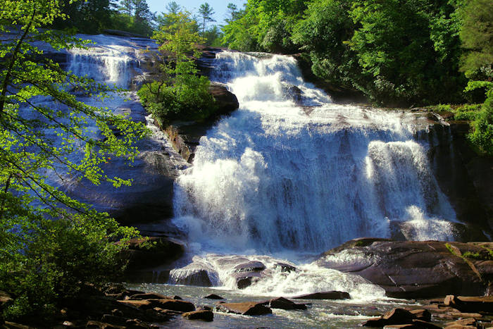dupont_state_forest