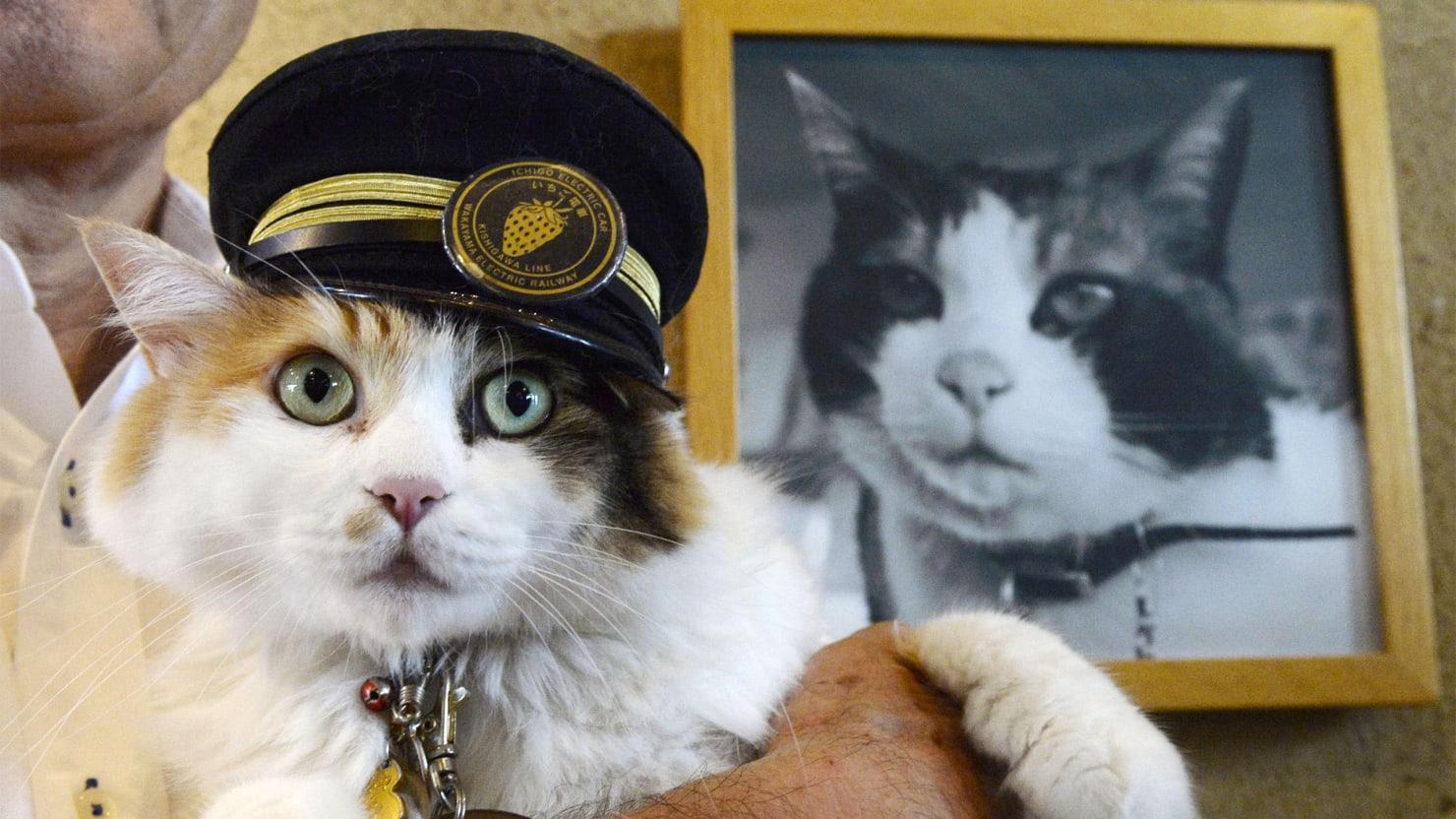 gatti giappone