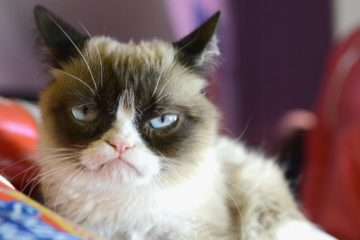 Grumpy Cat morto