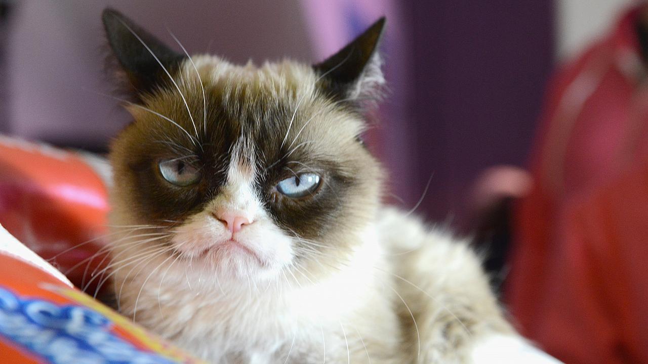 Grumpy Cat morto