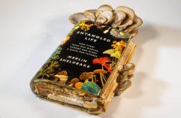 libri funghi